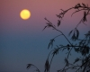 Moon Rise - Photographer: Peter Burford